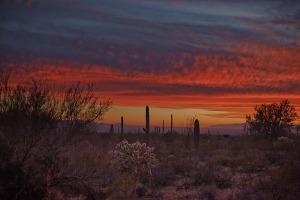 """""""Desert Twilight"""" by Bo Mackison, Seeded Earth Studio"""